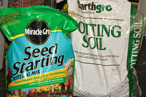 Wheatgrass a tutorial you 39 re so martha for Soil 7 days to die