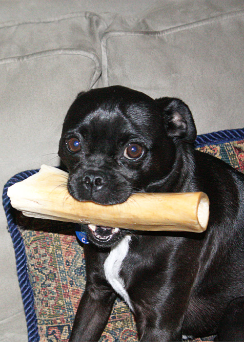 beck's bone