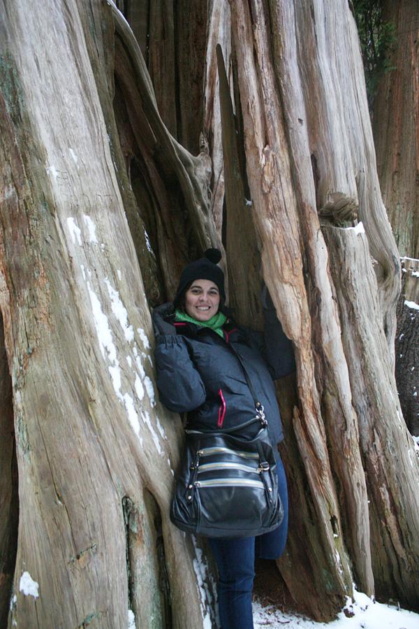me in tree
