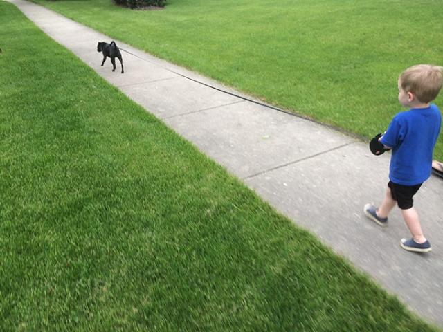 henry walking beck